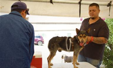 Campaña de esterilización de mascotas en Centro Comunitario Martín López
