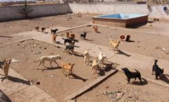 Rescata Gobierno Municipal 28 perros que se encontraban en condiciones deplorables